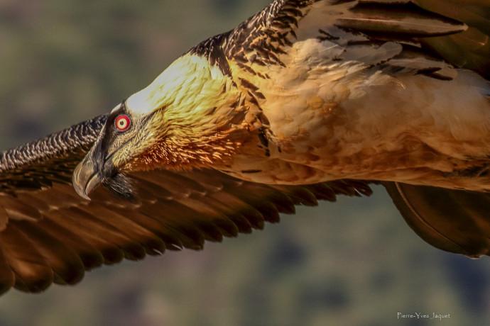 site de rencontre pour les ornithologues halal speed datation Malaisie